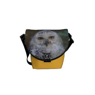Snowy Owl, Schnee-Eule 002.2 Commuter Bags