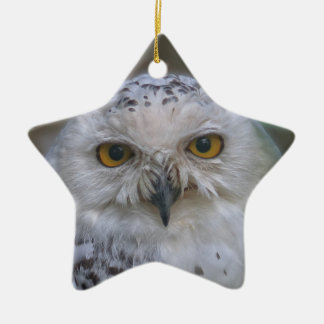Snowy Owl, Schnee-Eule 02_rd Christmas Ornament