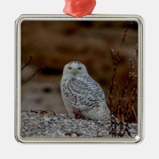 Snowy owl sitting on a rock christmas ornament