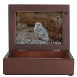 Snowy owl sitting on a rock keepsake box