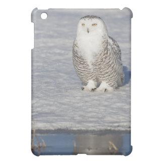 Snowy owl standing near water creating a iPad mini case