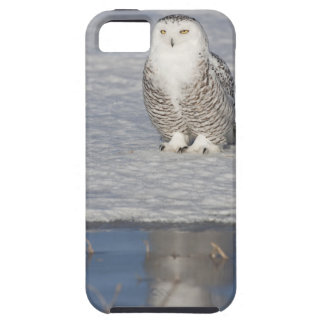 Snowy owl standing near water creating a iPhone 5 case