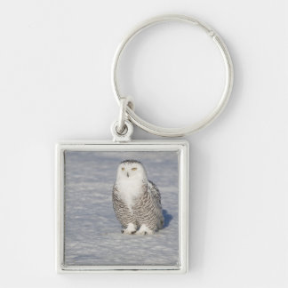 Snowy owl standing near water creating a key ring