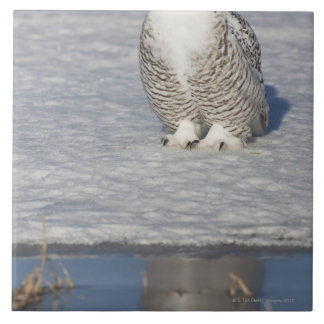 Snowy owl standing near water creating a tile