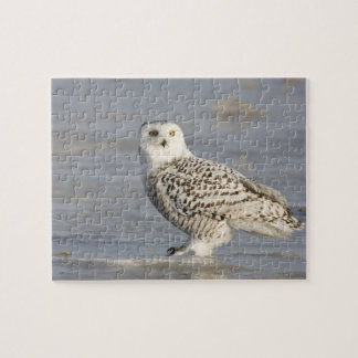 Snowy owl standing on ice, a mouse's tail jigsaw puzzle