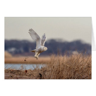 Snowy owl taking off card