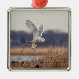 Snowy owl taking off christmas ornament