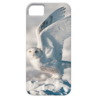 Snowy Owl taking off from snow Barely There iPhone 5 Case