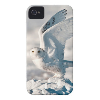 Snowy Owl taking off from snow Case-Mate iPhone 4 Cases