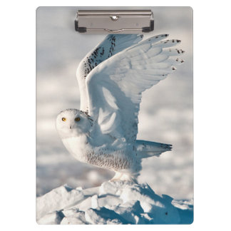 Snowy Owl taking off from snow Clipboards