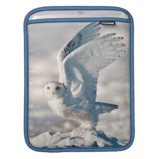 Snowy Owl taking off from snow iPad Sleeve