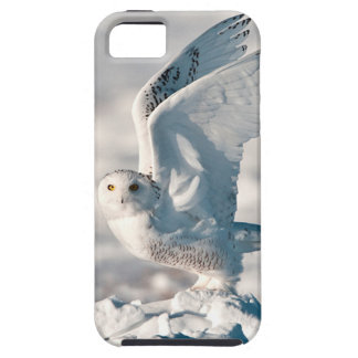 Snowy Owl taking off from snow iPhone 5 Cover