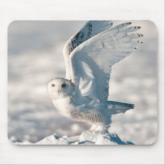 Snowy Owl taking off from snow Mouse Mat