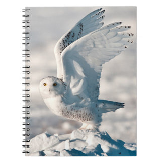 Snowy Owl taking off from snow Notebook