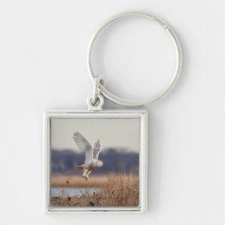 Snowy owl taking off key ring