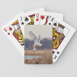 Snowy owl taking off playing cards