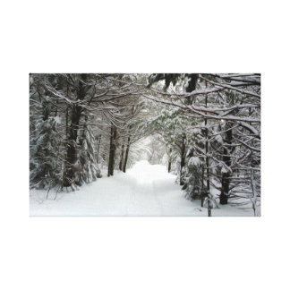 Snowy Path In Forest Canvas Print