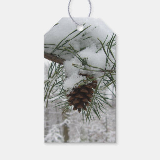Snowy Pine Branch Winter Nature Photography