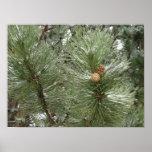 Snowy Pine Cones Poster