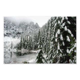 Snowy Pines along Lake Twenty-Two Art Photo
