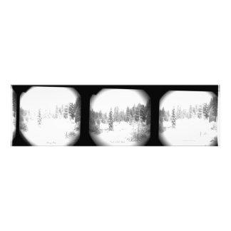 Snowy Pines North Lake Tahoe Wall Art