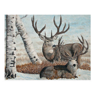 Snowy ridge bucks postcard