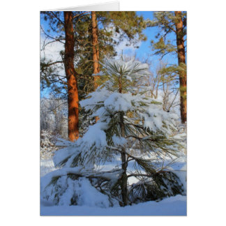 Snowy sapling card