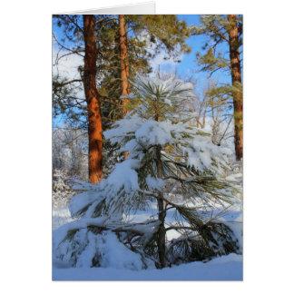 Snowy sapling greeting card