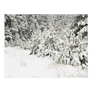 Snowy Shrubs Postcard