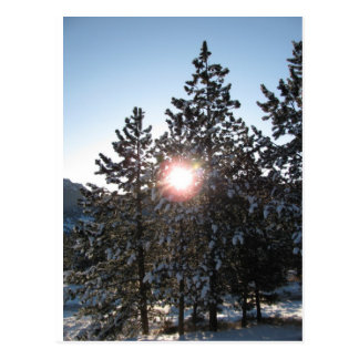 Snowy sunrise in Colorado Postcard