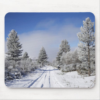 Snowy Track and Pine Trees, Cambrians, near St Mouse Mat