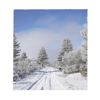 Snowy Track and Pine Trees, Cambrians, near St Notepad