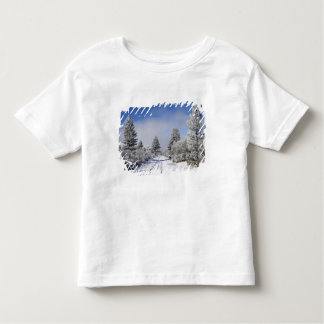 Snowy Track and Pine Trees, Cambrians, near St Toddler T-Shirt