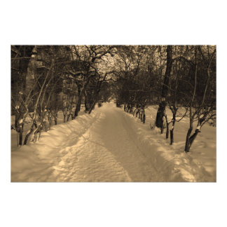 Snowy track with trees in sepia photo print