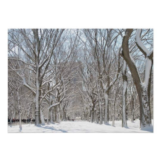 Snowy trees in Central Park Poster