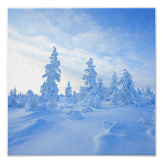 snowy trees in Lapland in Finland Poster