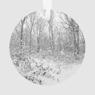 Snowy Trees in the Poconos