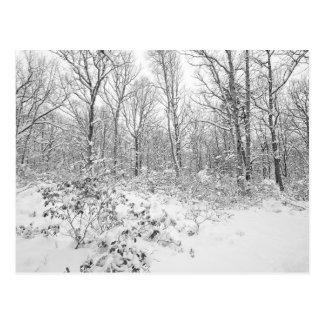 Snowy Trees in the Poconos Postcard