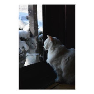 Snowy White Kitty Photograph