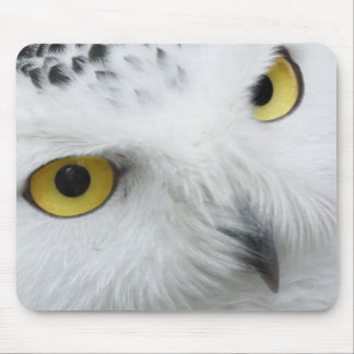 Snowy White Owl with Piercing Eyes Mousepads