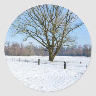 Snowy winter landscape with bare tree and blue sky round sticker