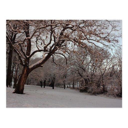 Snowy Woods photo postcard