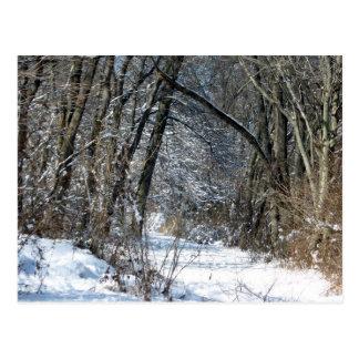 Snowy Woods Postcard