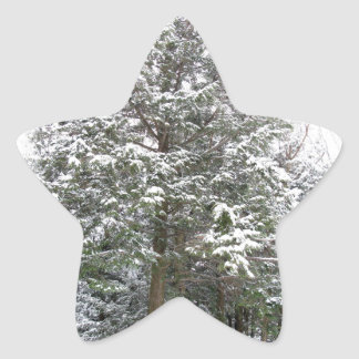 Snowy Xmas Trees in a Winter Wonderland Forest Star Sticker