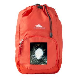 snrkeling blowfish (I) Backpack