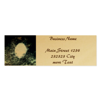 snrkeling blowfish (I) Pack Of Skinny Business Cards