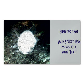 snrkeling blowfish (I) Magnetic Business Cards