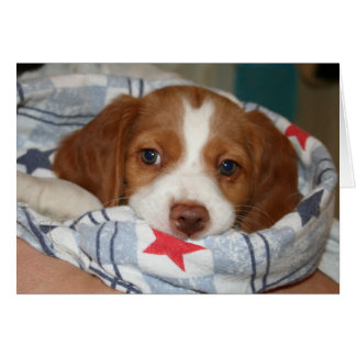 Snuggle Brittany Puppy Notecard Stationery Note Card