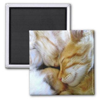 Snuggle Kittens Magnet