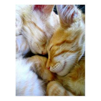 Snuggle Kittens Postcard